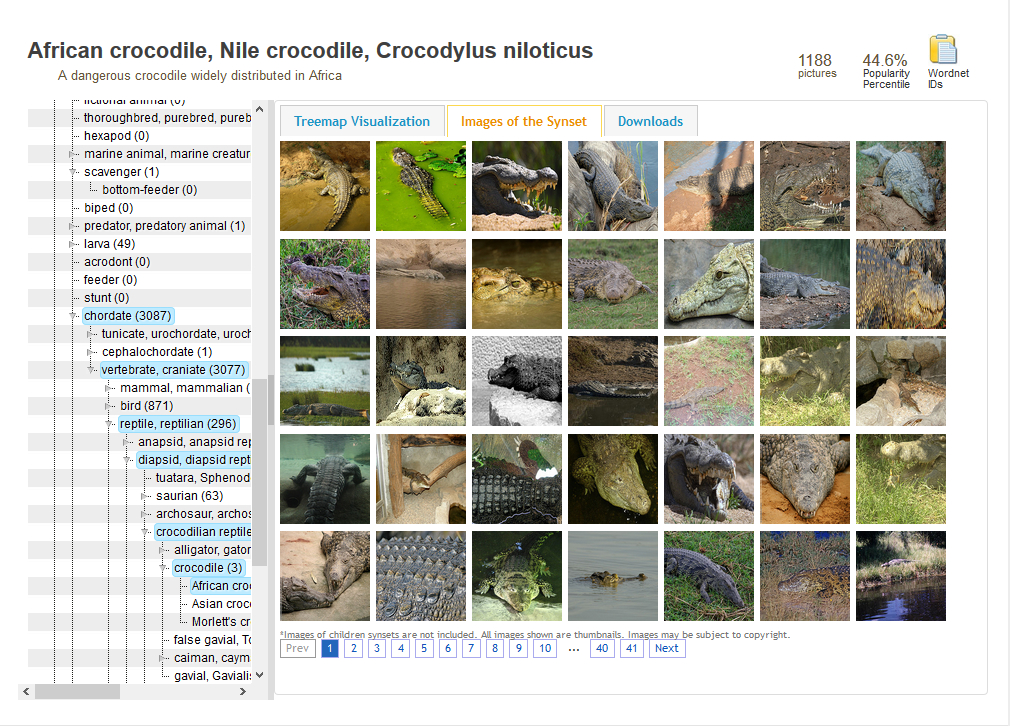 A page of pictures of crocodiles from ImageNet