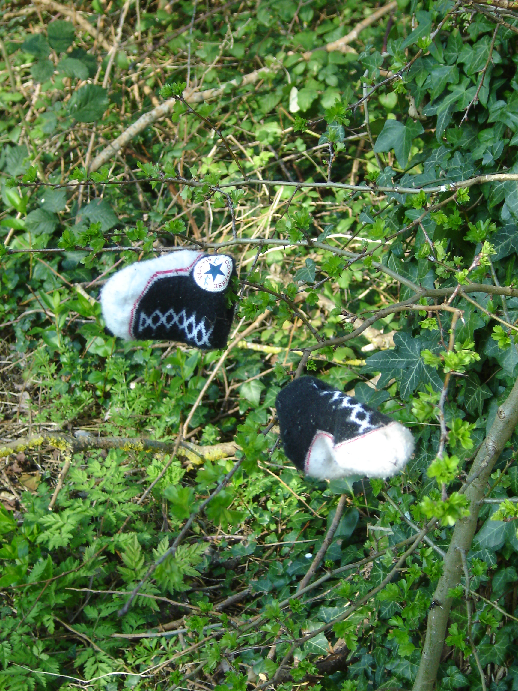 Shoes on a tree, Meadow Lane, Donnington Bridge, Oxford